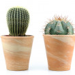 Two cactus on a white background — Stock Photo #55046825
