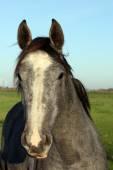 空の背景の馬の肖像画 — ストック写真