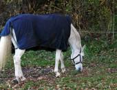 Cavallo in campo.... — Foto Stock