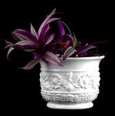 En una olla sobre un fondo negro de la flor — Foto de Stock