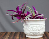 Pote de flor — Foto de Stock