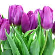 Bouquet of tulips — Stock Photo #61457213