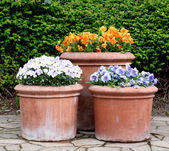 在花盆的多彩春天的花朵 — 图库照片