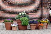 Potted flowers on the brick wall background — Fotografia Stock