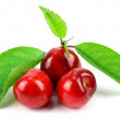 Sweet Cherry with stem and leaf on white background — Stock Photo #75114637