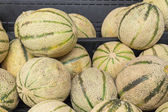 Cantaloupe melon closeup — Stock Photo