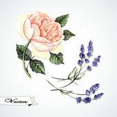 Watercolor rose and lavander — Vector de stock
