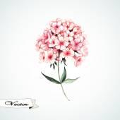 Phlox rosa acuarela — Vector de stock