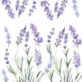 Watercolor  pattern with Lavender — Vetorial Stock