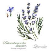 Watercolor Lavender illustration Lavender — Stock Vector