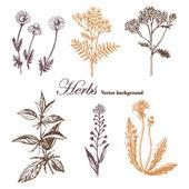 Set of medicinal herbs. — ストックベクタ