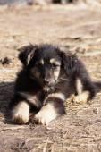 Cute little  puppy sitting — Stock Photo