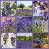 Lavender collage with nine photos — Stock Photo