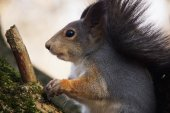 The squirrel sits on a tree branch.  — Stock Photo