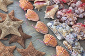 Beautiful souvenir seashells for sell in Cancun Mexico — Stock Photo