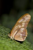 Beautiful tropical butterfly setting in a conifer tree — Stock Photo