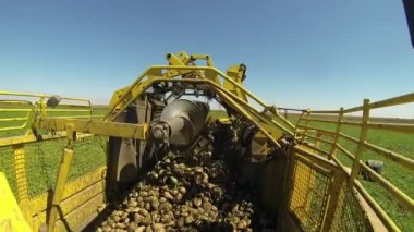 Loading harvested sugar beets — Stock Video