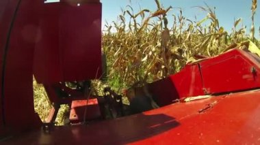 Cob harvester cutting corn stalks — Stockvideo