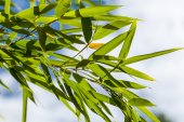 Green leaves against a sky — Stock Photo