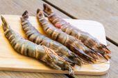 Four fresh whole tiger prawns — Stock Photo