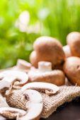 Agaricus mushrooms — Stock Photo