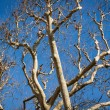 Branches against a blue sky — Stock Photo #59407195