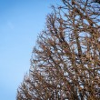 Branches against a blue sky — Stock Photo #61432475