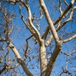 Branches against a blue sky — Stock Photo #61432647
