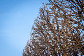 Branches against a blue sky — Stock Photo