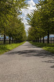 Road with green trees — Stock Photo