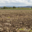 Harvested potato field with rotovated earth — Stock Photo #67655649