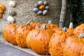 Halloween cucurbita pumpkins — Stock Photo