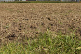 Harvested potato field with rotovated earth — Stock Photo