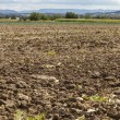 Harvested potato field — Stock Photo #68485661