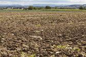 Harvested potato field — Stock Photo