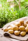 Farm fresh  potatoes on a hessian sack — Stock Photo