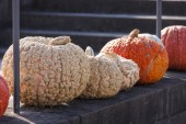 Maxima pumpkins from autumn — Stock Photo
