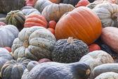 Different pepo cucurbita pumpkins — Stock Photo