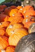 Piles of colorful variety pumpkins — Stock Photo