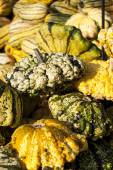 Pumpkins from autumn harvest — Stock Photo