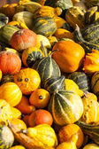 Cucurbita pumpkins from autumn — Stock Photo