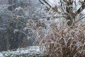 Misty winter landscape — Stock Photo
