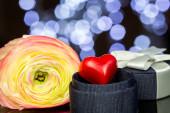 Beautiful pink and yellow rose — Stock Photo