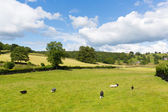 Near Sawrey country view by Hawkshead Lake District former village home to Beatrix Potter — Stock Photo