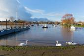 River Stour Christchurch Dorset England UK with swans — Stockfoto