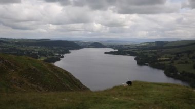 Black and white sheep with elevated view of Ullswater Lake District Cumbria England UK in summer — Stock Video