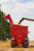 Wheat grains filling tractor's trailer — Stock Photo