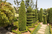 Topiary in Botanical garden of Funchal, Madeira island — Stock Photo