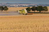 Combine harvesting golden wheat — Stock Photo