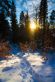 Winter Carpatian mountains — Stock Photo